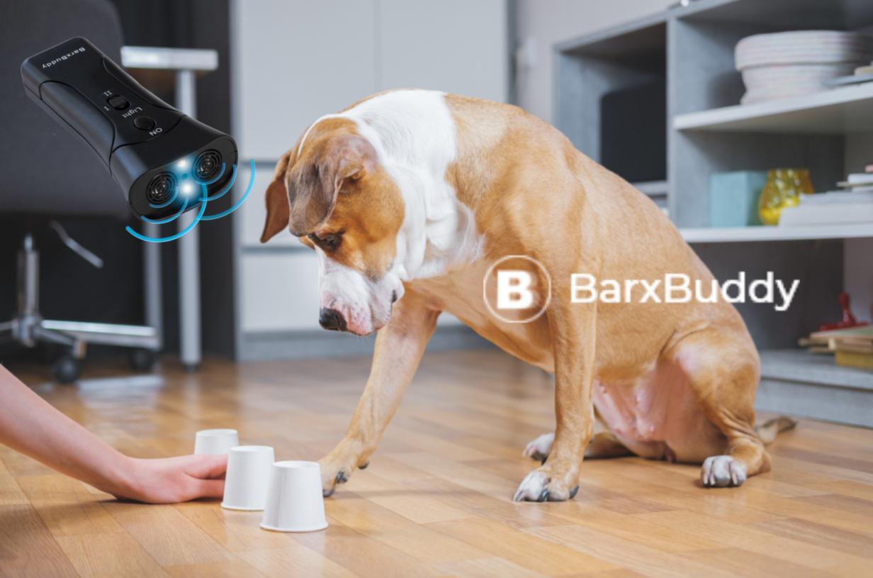 Training your dog at home using the BarxBuddy Dog Training device.